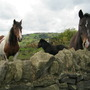 Compare the Horses.by the wall...com ! :o)