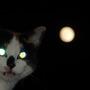 Lunatic Cat...