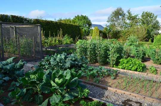 Veg garden 2011