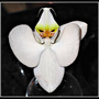 Better_orchid