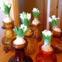 Hyacinths for Christmas