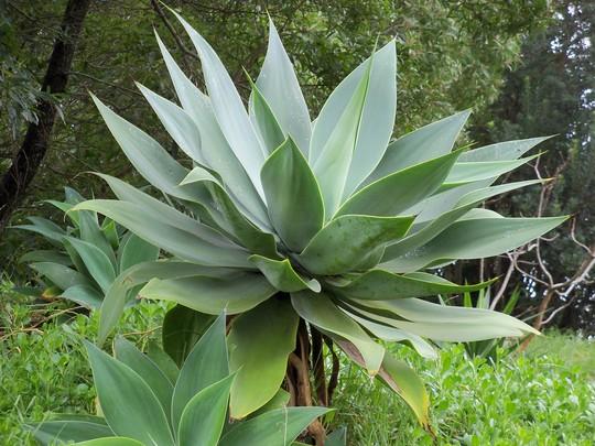 A big plant