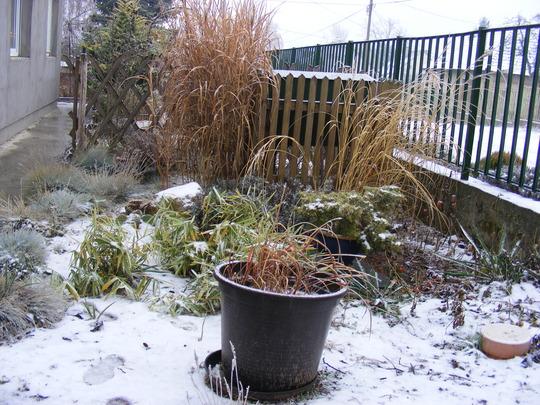 The gravel garden takes on a seasonal look