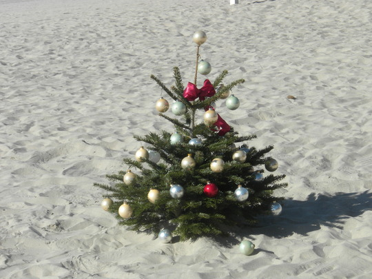 Little Christmas Tree on Mission Beach, San Diego, CA.