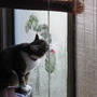 'Elkie' drying the Window Glass