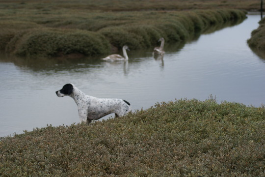 Sluggy & swans in Porlock