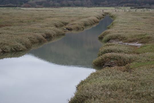 Porlock marshes