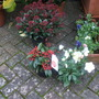Winter plants in the Sale