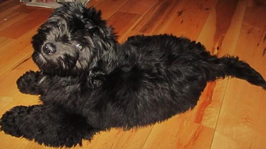 Charley....16weeks old....