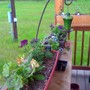 window boxes on the porch
