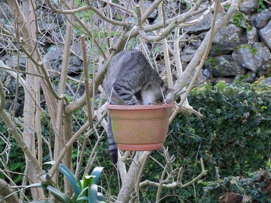 Barney & the Catnip Pot