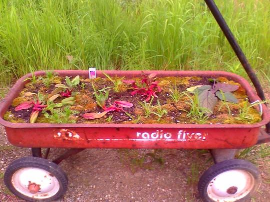 my wagon planter
