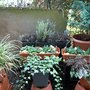 Garden_111220_3_
