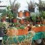 Garden_111220