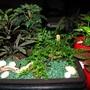 Mini_garden