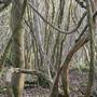 Woods_7_jan_2012_017