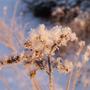 Snow_crystals3