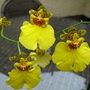 New_orchid_bargain