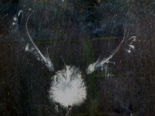 Imprint of a Dove left on the window