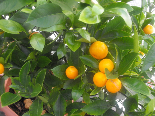 Still lots of Oranges...........