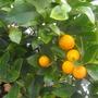 Still lots of Oranges...........