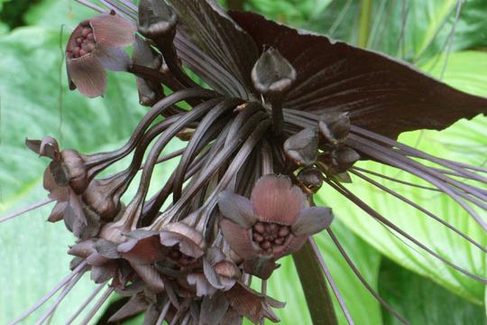 bat_plant.jpg