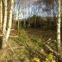 Coppice in Kent