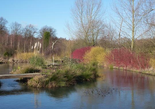 January Pond