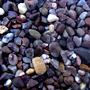 pebbles on the gravel garden
