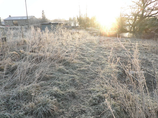 Frost on the veg patch