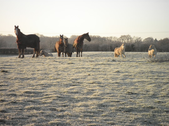 Gang in the frost