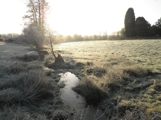 Morning sun on the frost