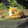 Freddie.....having a doze in the sunshine...........