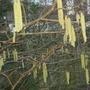 Ulverston_november_2011_035