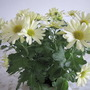 Chrysanthemum from Morrisons