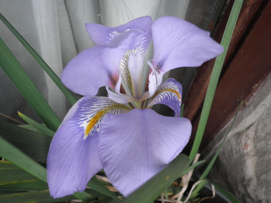 First big flower of 2012 - Unexpected guest