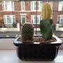 Cacti & Suculents.