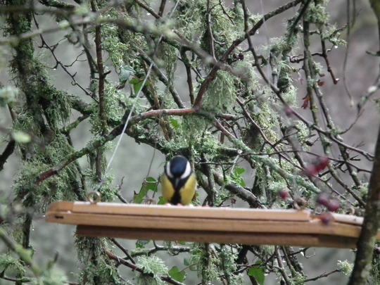 New Bird Table