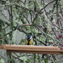 New Bird Table