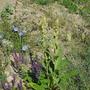 Wildflowers in Macedonia