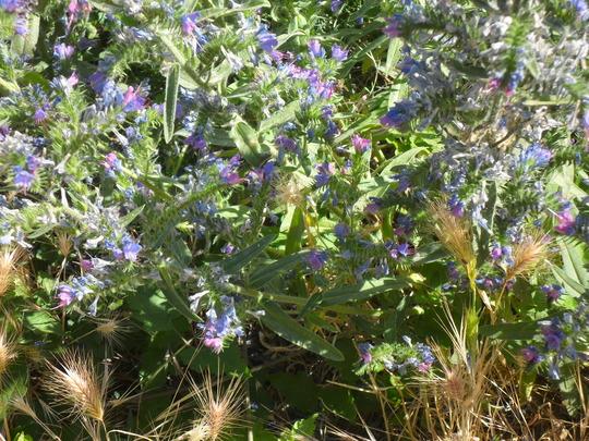 Wildflower in Macedonia