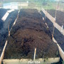 Plot 12A Raised beds #3 (After putting up boards) 27-01-2012 006