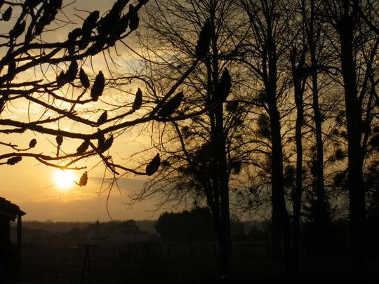 Our Sunrise 29.1 part 2