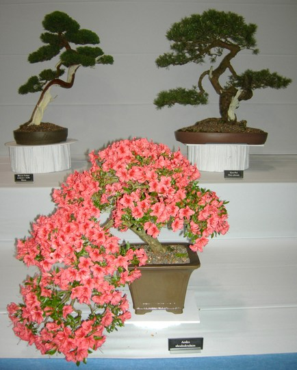 Bonsai, Gardening Scotland 2008