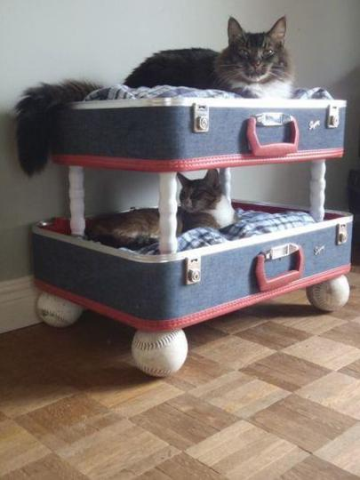 For you cat lovers :)