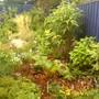 Woodland_garden