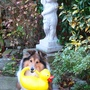 BIRD BATH HELPER