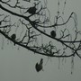 Birds in branch