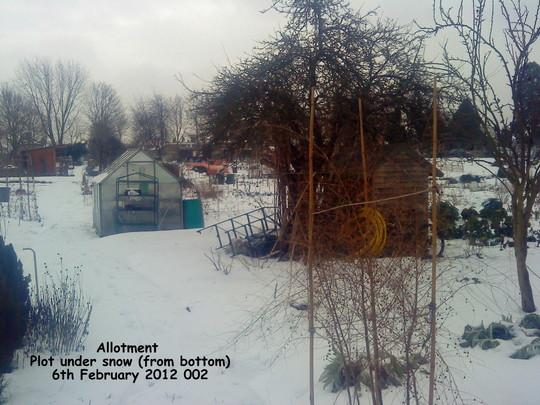 Allotment Plot under snow (from bottom) 06-02-2012 002