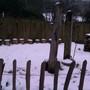 Snow in the Wildlife Area